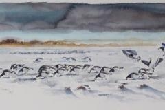 Barnacle Geese | 70x40 cm