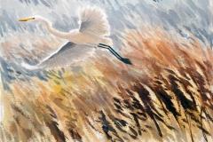 Great Egret, Florida | 60 x46 cm / Aquarel