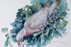 Common Wood Pigeon | 41x31 cm
