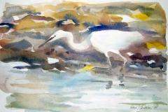 Little Egret | 38 x 26 cm / Aquarel