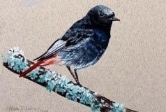 Black Redstarts | 30x45 cm