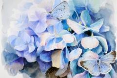 Holly Blue | 39 x 33 cm / Aquarel