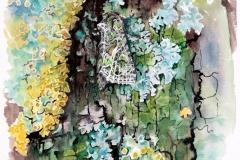 Orach Moth | 35 x 50 cm / Aquarel