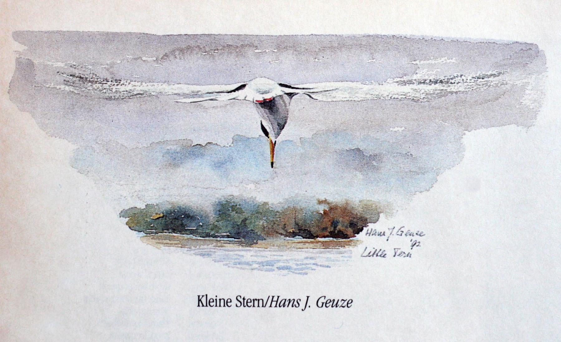 Grasuinen-1993