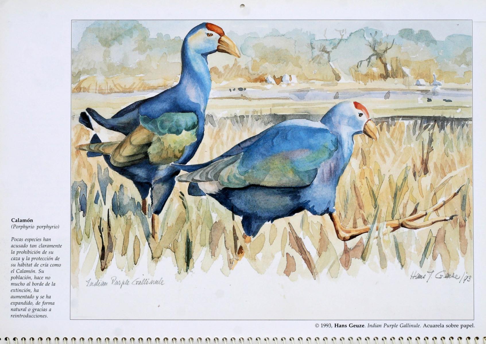 SEO-Birdlife-kalender-1994
